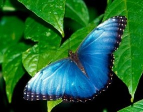 butterflies_-_02-800x600