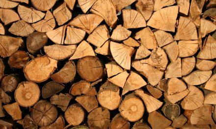Nowość! Bezpieczna metoda zwalczania owadów drewnożernych