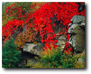 Fall In New England Wallpaper Fall Foliage In New England Maine Fall Foliage Fall