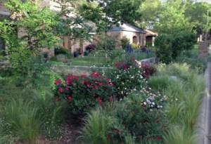 Thomas_Garden_front_bed_2 (2)