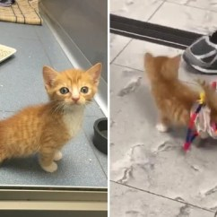 Wheelchair For Cats Toddler Table And Chairs Canada Paralyzed Kitten Speeds Around The Hospital Using Lego Inside Edition