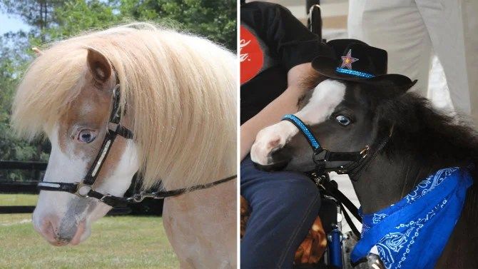 Miniature Horses That Provided Therapy To Victims Of Mass