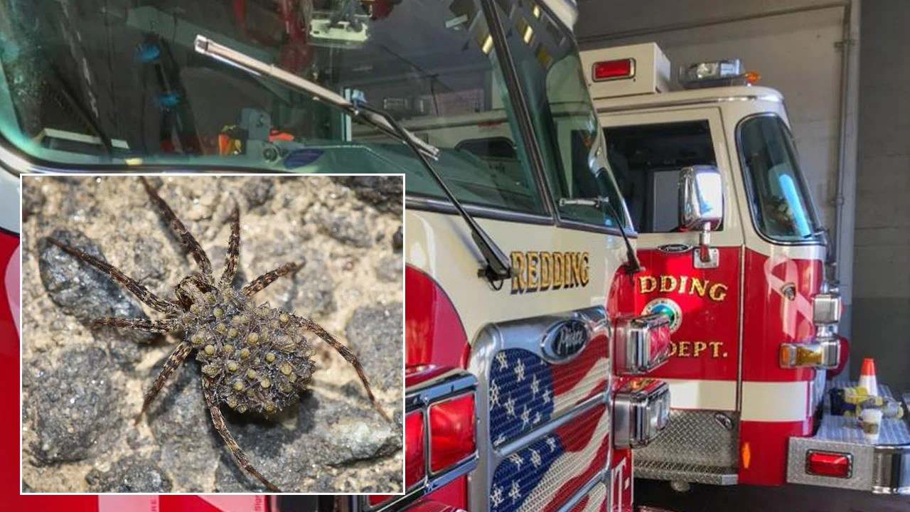 Man Trying To Kill Spider Sets Fire To His Apartment