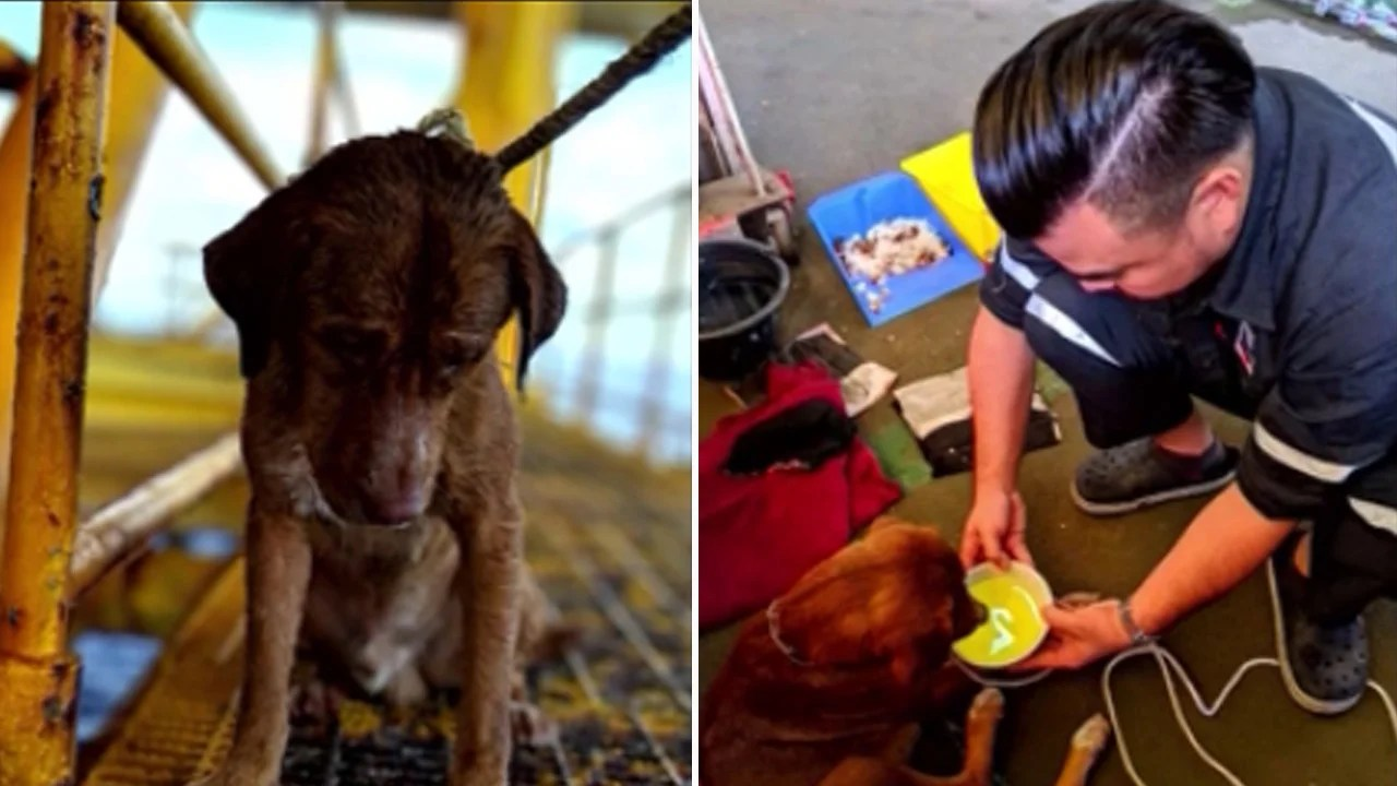 Dog Rescued After It Was Found Swimming 136 Miles From Thailand Coast Inside Edition