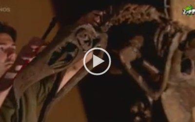 VIDEO Argentavis Gaia Zoo | NOS Jeugdjournaal