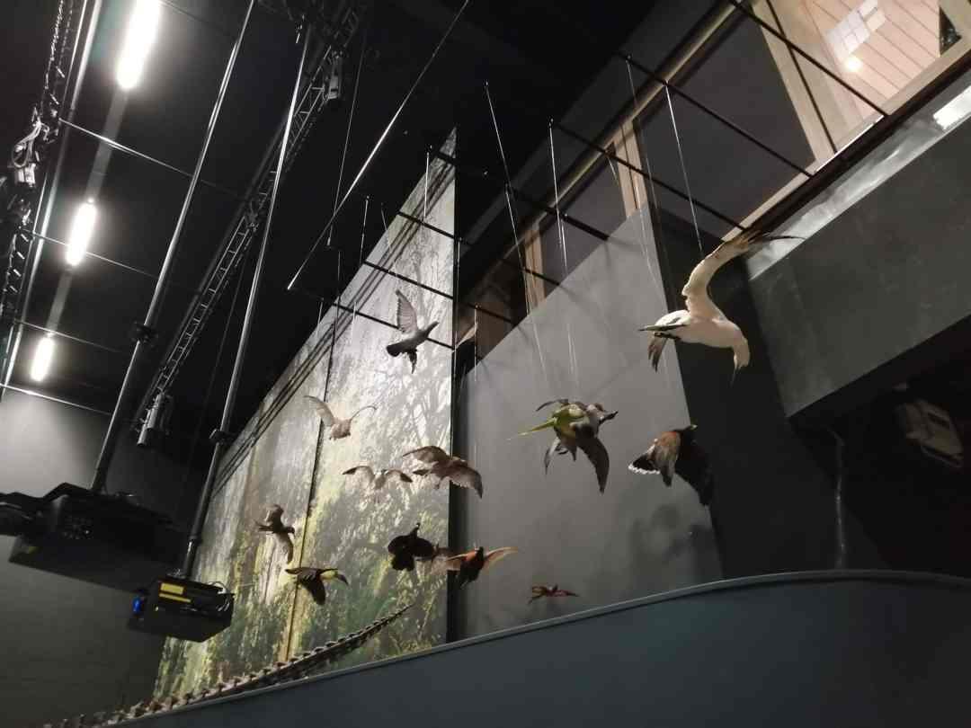 Expo & Educatie | ophangen vogels dinozaal | Naturalis Biodiversity Center
