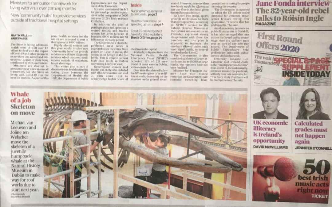 The Irish Times | Demontage skelet Bultrug | National Museum of Ireland –  Natural History | Dublin (IRL)