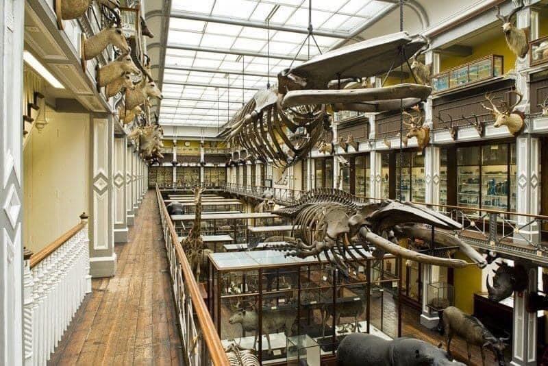 Skeletten | demontage bultrug & vinvis (links), vóór demontage | National Museum of Ireland, Dublin