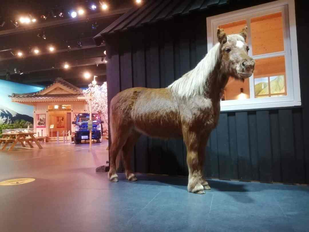 Huidpreparaten | Opgezet IJslander Paard | Zaal Aarde - Naturalis Biodiversity Center