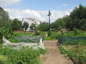 Welcome to the Kuguncuk community gardens.