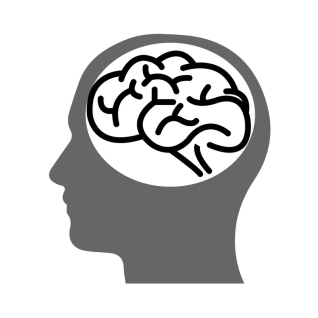 Peek Inside the Newly Re-Injured Brain: Part 2