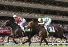 Saudi's ₹ 110 cr event reshuffles richest horse races chart - InsideSport