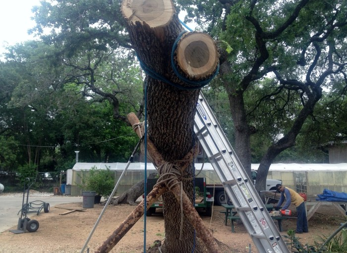 Tree Removal Tips 3