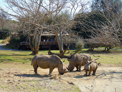 Wild Africa Trek savannah