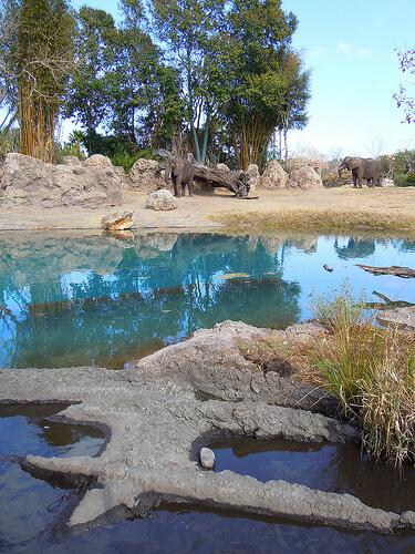 Elephant pool on savannah