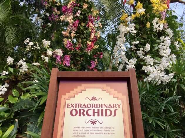 Extraordinary Orchids (Mexico)