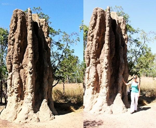 Abi next to Termite Mound