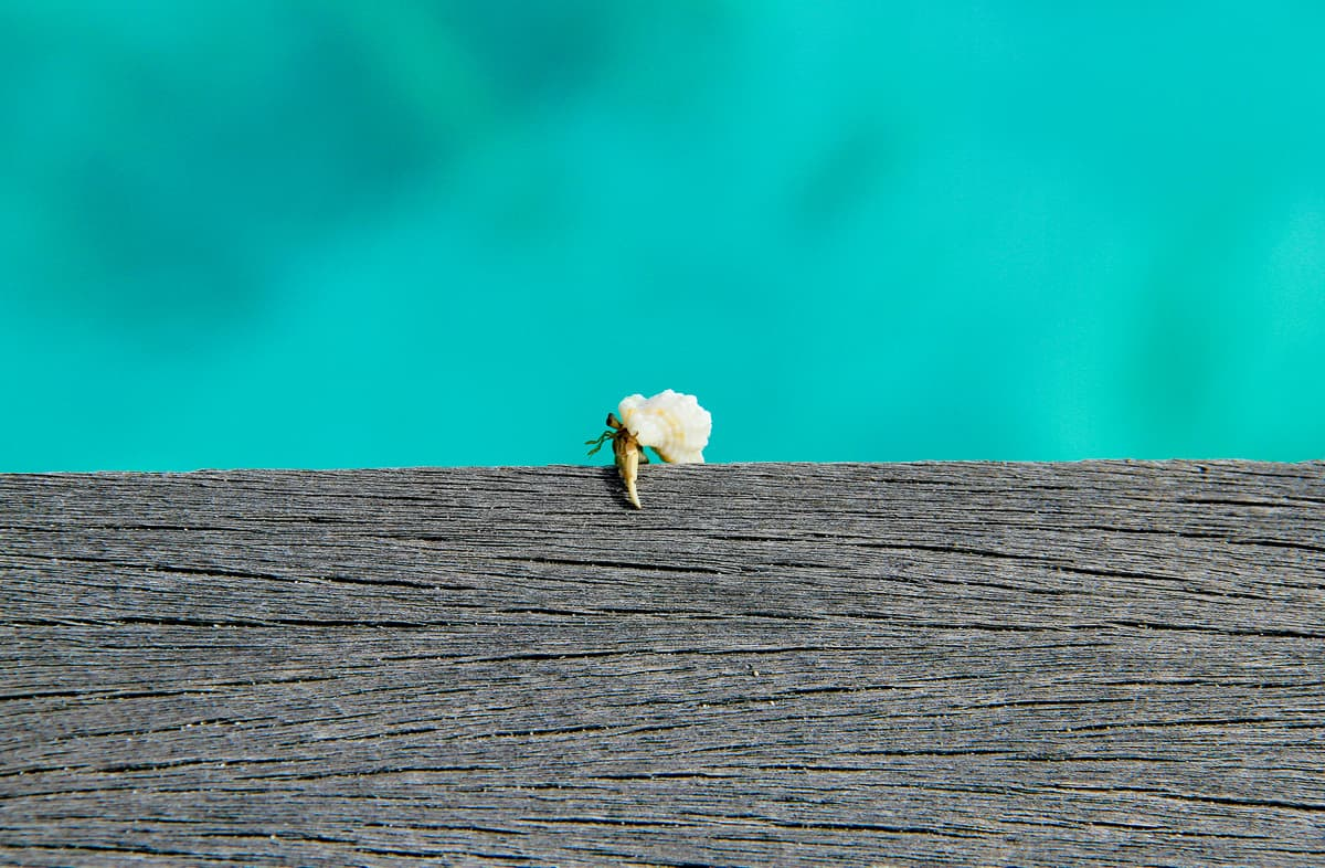 The Emotional Meaning of Home - What is home - crab takes his home with him in the Maldives