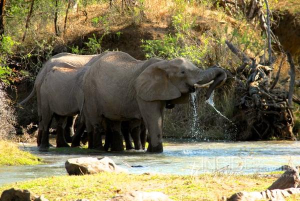 Elephants in Madikwe Game Reserve