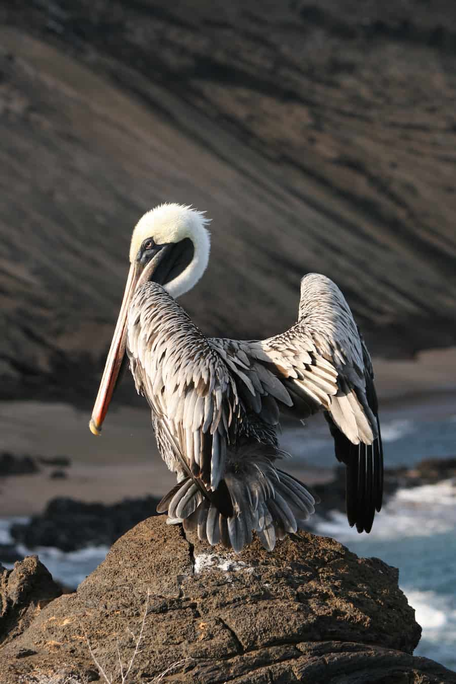 Pelican in the Galapagos Islands - by Mr Travel Lab