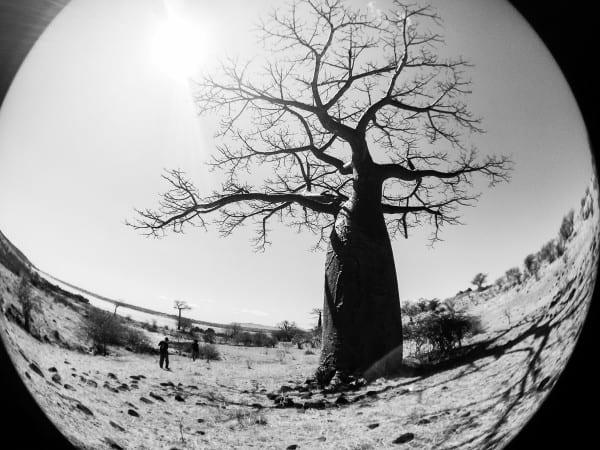 Baobab trees in Madagascar- via @insidetravellab