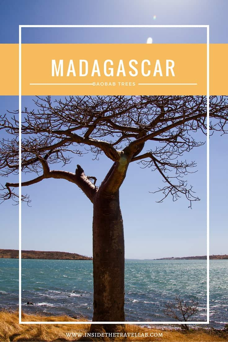 Visiting Baobab Trees in Madagascar