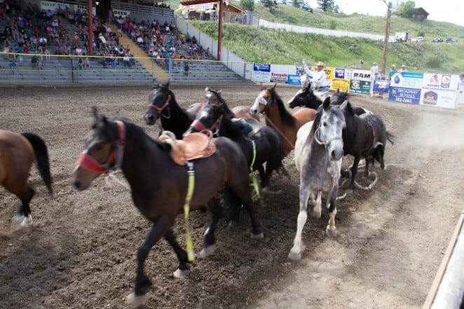 Horses at the Williams Lake Stampede