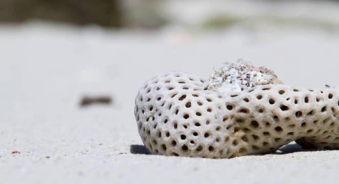 Madagascar Beach-up close with the sand
