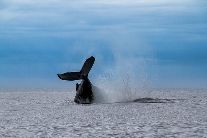 Whale watching from Tsarabanjina Madagascar-2