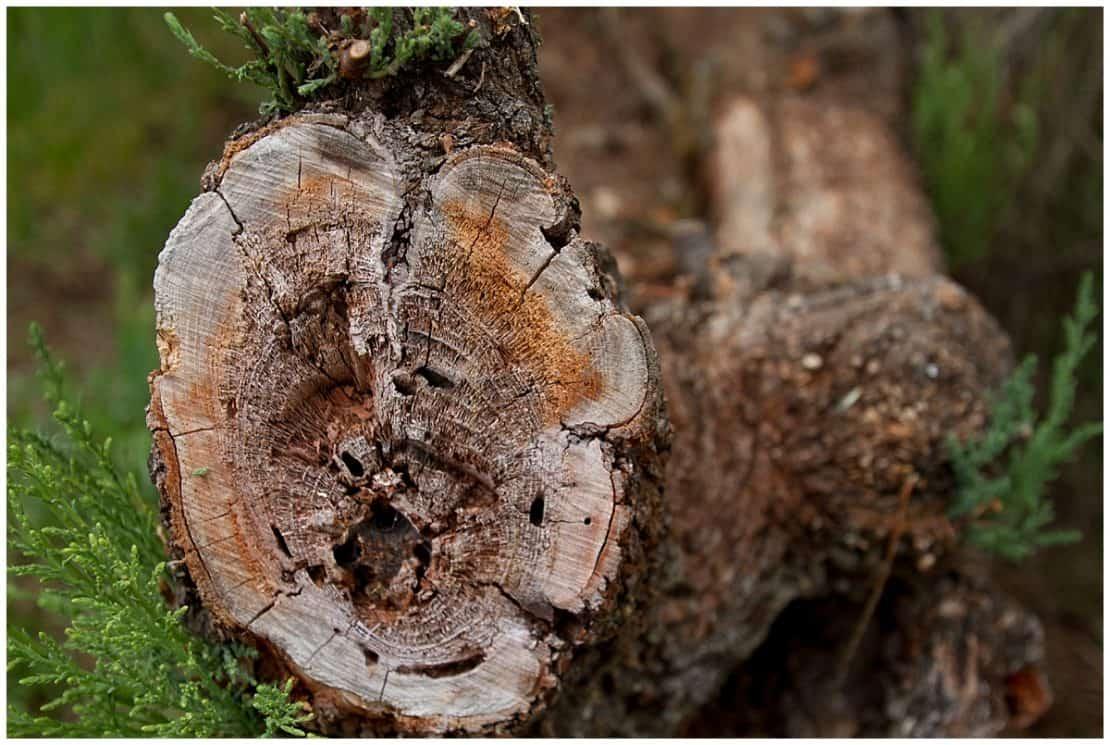 Tablas de Daimiel Forestry