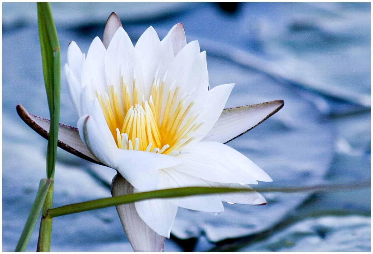 Lily on the Okavango Delta in Botswana