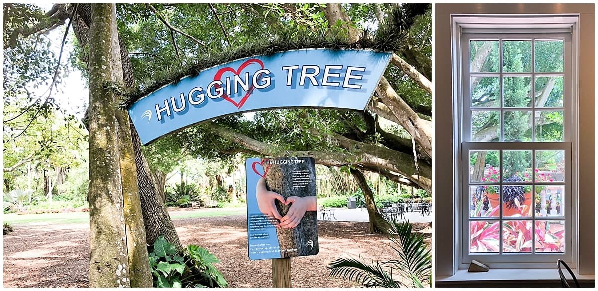 Hugging tree in Marie Selby Botanical Gardens