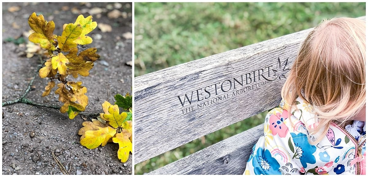 Exploring the beautiful grounds of Westonbirt Arboretum in the Cotswolds