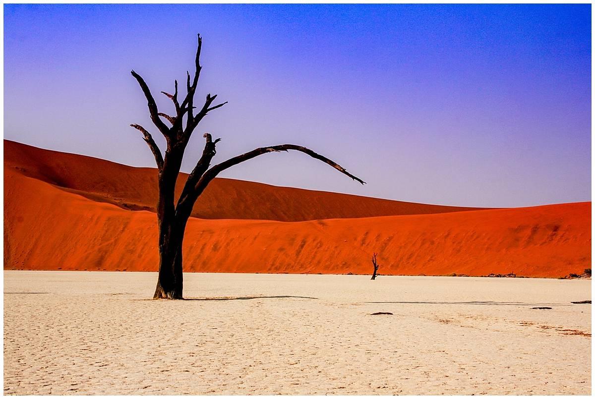 Namib Desert - dead trees in Sossusvlei