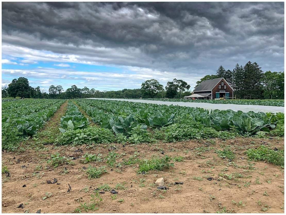 Appleton Farms Cape Ann Massachusetts