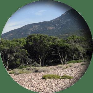 natürliche Umgebung auf Korsika
