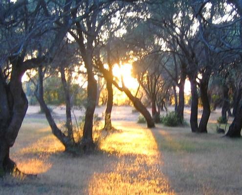 Sonnenuntergang in Olivenhain