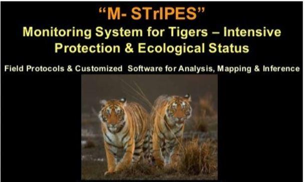 m-stripes