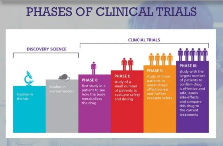 clinical trial phases
