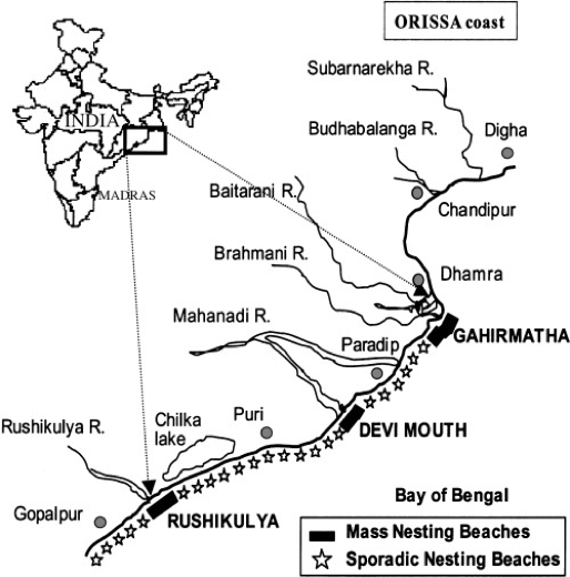olive ridley turtle locations, olive ridley turtle