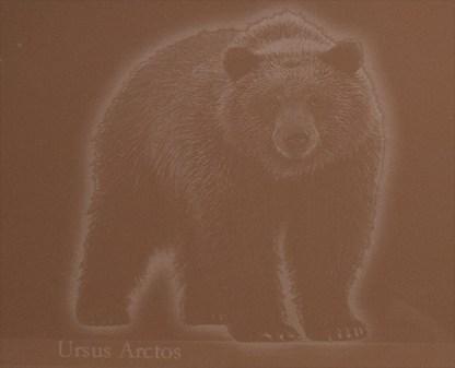 Karhu Ursus Arctos Hiekka