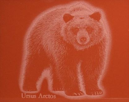 Karhu Ursus Arctos Punainen