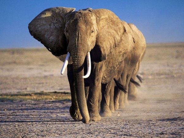 7579elefantes1