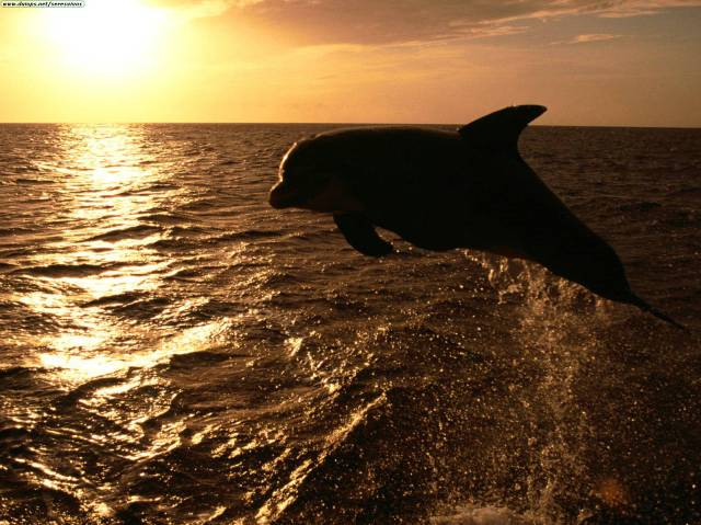 delfin_ocaso