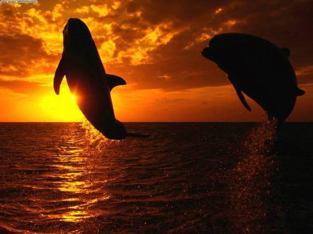 delfines_atardecer