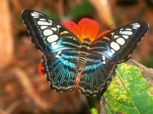 mariposa_de_colores