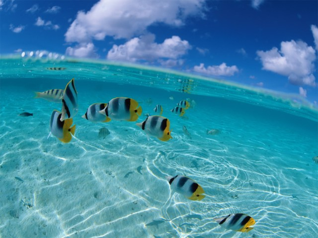 peces_tropicales