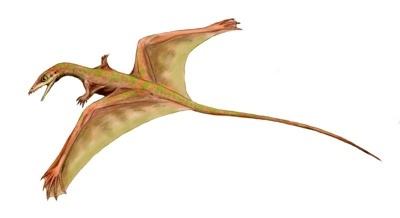 sharovipteryx_bw-tm
