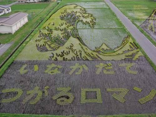 plantações de arroz no Japão 18