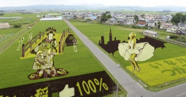 plantações de arroz no Japão 21